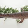 Mơ ăn cá lóc là điềm về ăn uống